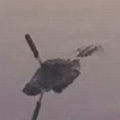 米で頭部にナイフが突き刺さったワニを目撃 発見者「救ってあげたい」