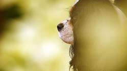 サッカーを見るイケメン犬、「偶然のキメ顔」が超かわいい
