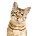ネコ好きにはたまらない事態だが…(AFLO)