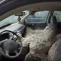 米で車の中に作られた巨大なスズメバチの巣が見つかる 映像が話題