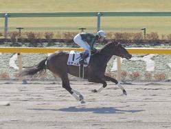 【新馬/東京2R】武豊騎乗 ミティルが6馬身差楽勝