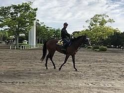 【日本ダービー】ランフォザローゼス 藤沢和師「前走以上に走れる」