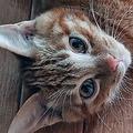 感染したら猫たちの世話は誰が…病院を辞めた一人暮らし女性