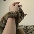 「休暇申請」を懇願する猫 「これは出勤できない事案」