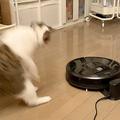 ルンバに驚きすぎて後ろ足で「ビヨーン」と飛んだ猫の決定的瞬間