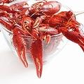 中国メディアは、中国人が好んで食べるザリガニについて、魚介類をこよなく愛する日本人が好んで食さない理由について考察する記事を掲載した。(イメージ写真提供:123RF)