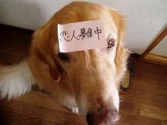 【ファンキー通信】ワンワン専用ラブホテルで、犬がニャンニャン